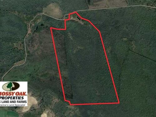 250 Acres of Prime Bear Hunting LA : Roper : Washington County : North Carolina
