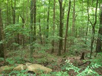 24.9 Acres Overlooking Bucks Pocket : Section : Jackson County : Alabama
