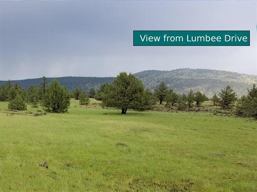 2.5 Acres Little Valley, Ca : Little Valley : Lassen County : California