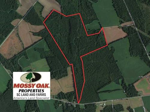105 Acres of Timber Land For Sale : Lake City : Florence County : South Carolina