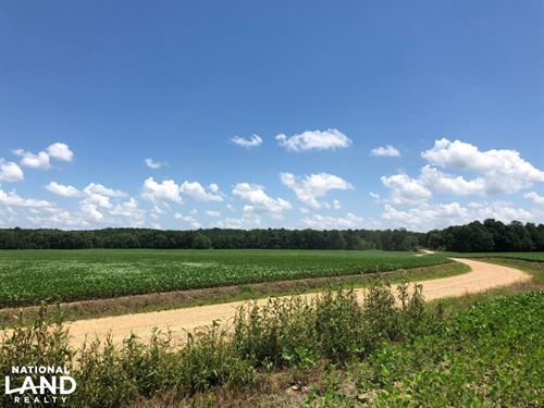 County Road 178 Farmland And Timber : Bruce : Calhoun County : Mississippi