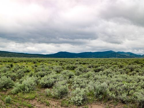 Madeline Valley Jewel : Termo : Lassen County : California