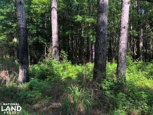 Calhoun County Tree Farm : Pittsboro : Calhoun County : Mississippi