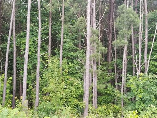 5.04+/-Acres Multiple Building Site : Signal Mountain : Sequatchie County : Tennessee