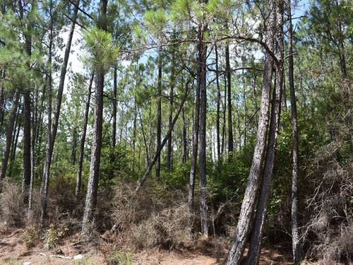 30-011 Flomaton-Welka Tract 5 : Flomaton : Escambia County : Alabama