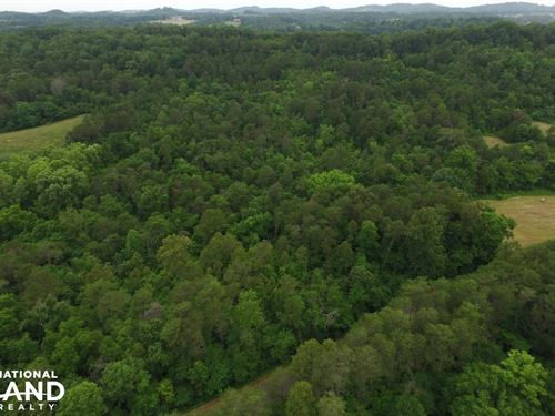 Dandridge Wooded Land Tract : Dandridge : Jefferson County : Tennessee