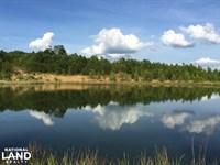 Shoal Creek Road Timber Hunting : Ashville : Saint Clair County : Alabama