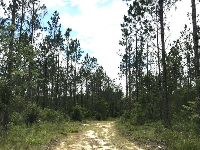Barbarrow Tract - 150 - Acres : Bay Minette : Baldwin County : Alabama
