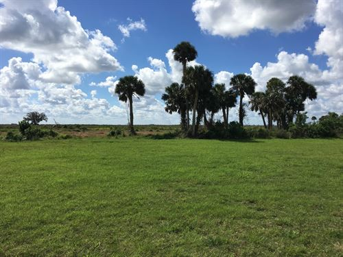 3,200 Acres Of Income Potential : Lake Placid : Highlands County : Florida