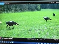 Eagle Rock 478 : Eagle Rock : Barry County : Missouri