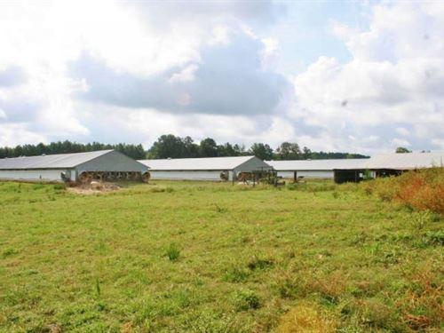 5 Broiler House Poultry Farm Pastur : Paulding : Jasper County : Mississippi