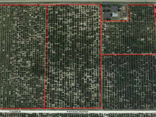 46 Acre Citrus Grove In Avon Park : Avon Park : Polk County : Florida