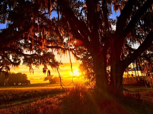 220 Acre Ranch On Bystre Lake : Brooksville : Hernando County : Florida