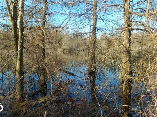 Cypress Brake Duck Woods : Parkdale : Ashley County : Arkansas