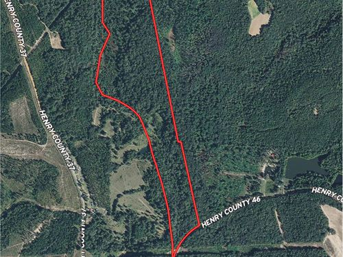 Excellent Hardwood Timber Tract : Abbeville : Henry County : Alabama