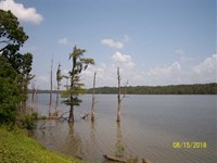 243 Acres Of Timberland Near : Woodville : Adams County : Mississippi