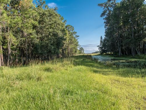 222 Acres Of Beautiful Deen Still : Polk City : Polk County : Florida