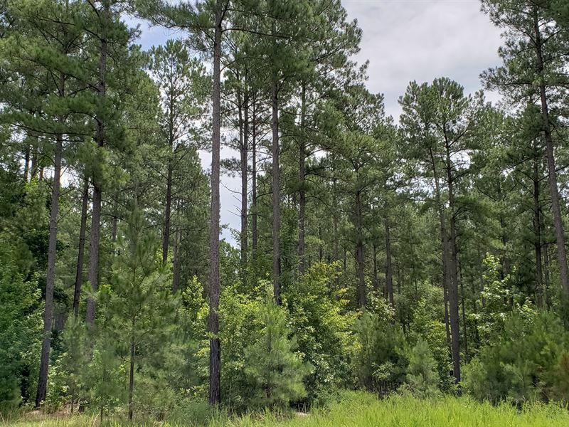 Rare Timber Investment Opportunity : Warrenton : Warren County : Georgia
