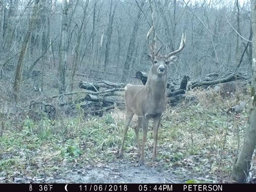Large Tract Of Hunting And Farm : Arena : Iowa County : Wisconsin