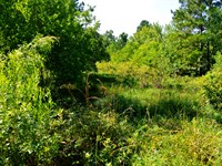 Country Peacefulness Close To City : Conroe : Montgomery County : Texas
