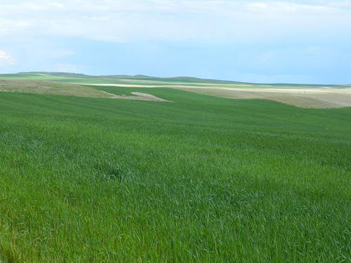 Perkins County Cropland : Ralph : Perkins County : South Dakota