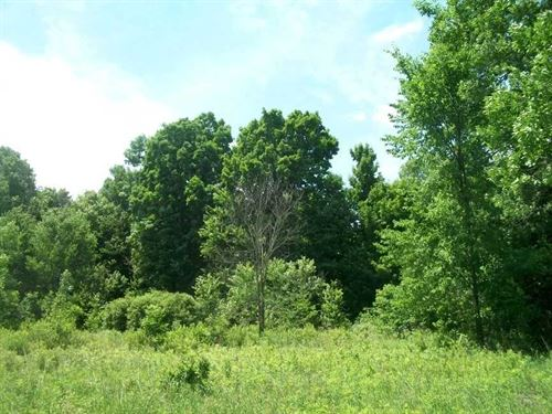 80 Acres - Sheldon, Taylor County : Sheldon : Taylor County : Wisconsin