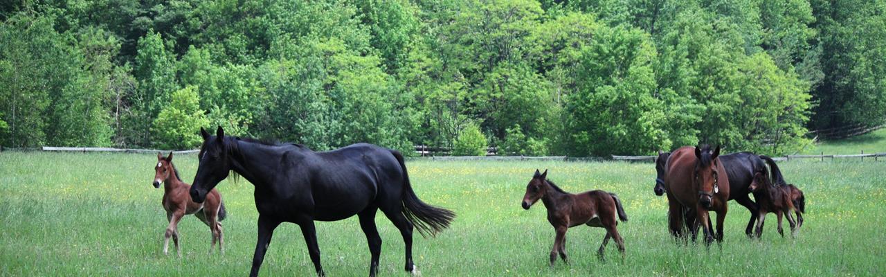 Profitable Turnkey Horse Farm : Binghamton : New York County : New York