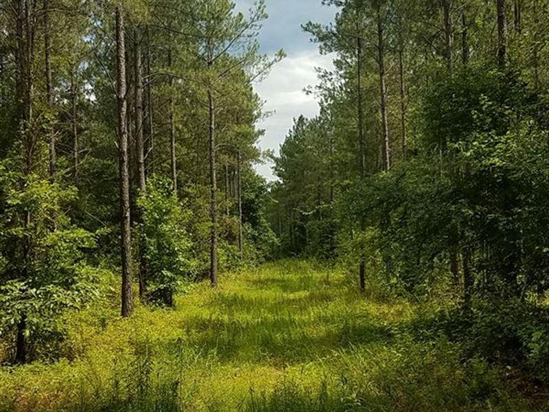 320+/- Acres Timberland : Vinemont : Cullman County : Alabama