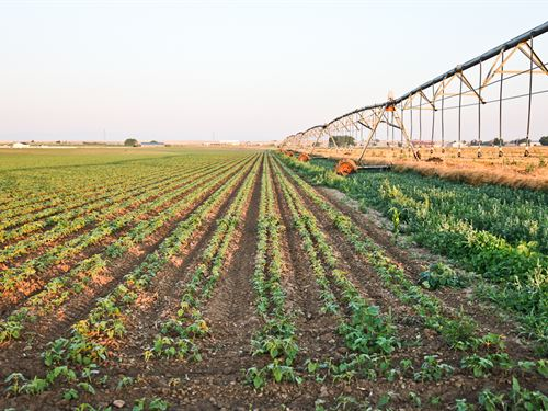 Ck Organic Farm : Pierce : Weld County : Colorado