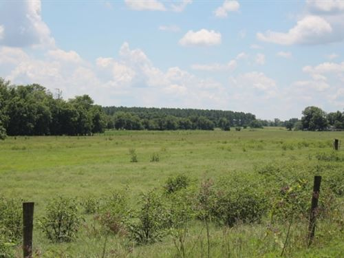 Fenced Pasture & Hunting : Vienna : Dooly County : Georgia