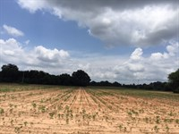 Diverse Tract Historic Plains : Plains : Sumter County : Georgia