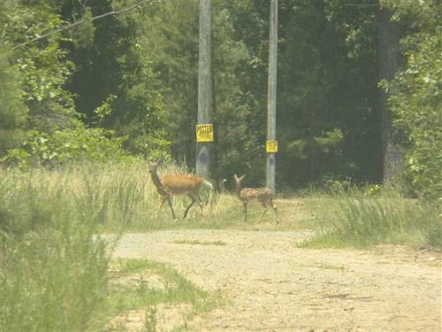 20 Beautiful Wooded Acres $32K : Shirley : Van Buren County : Arkansas