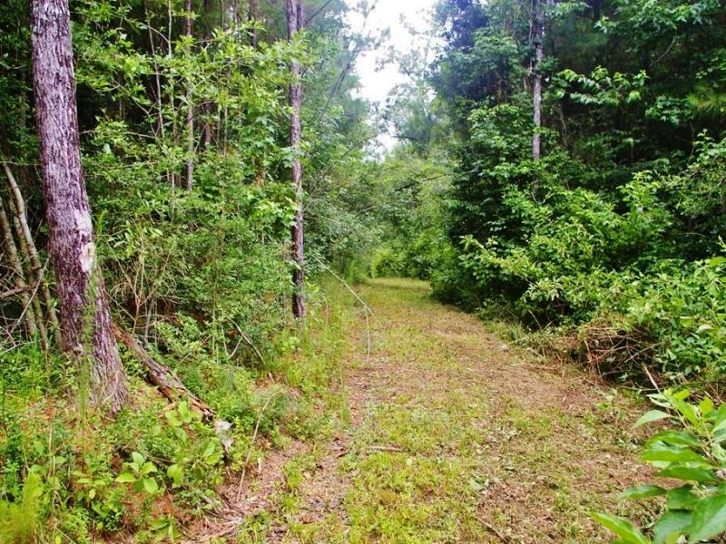 91.83 Acres Home Site / Hunting : Smithdale : Amite County : Mississippi