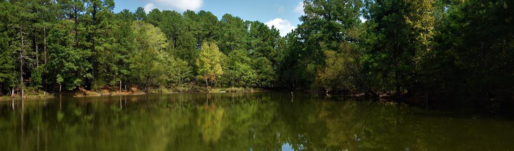 166.19 Acres, Newberry County, Sc : Kinards : Newberry County : South Carolina
