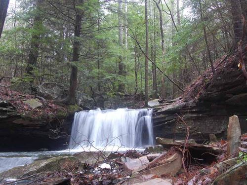 96.57+/-Acres W/ 2 Beautiful Creeks : Gruetli Laager : Marion County : Tennessee