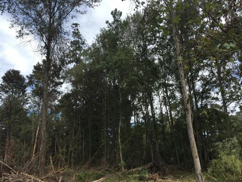 8.42 Acres in Independence, Louisiana : Independence : Tangipahoa Parish : Louisiana