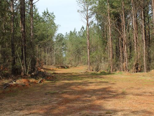 Simpson County Wildlife Tract : New Hebron : Simpson County : Mississippi