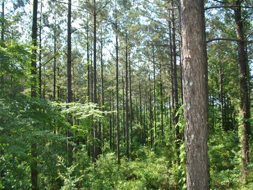 Timber Investment in Georgetown : Georgetown : Copiah County : Mississippi
