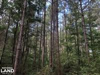 Scott County Tree Farm : Morton : Scott County : Mississippi