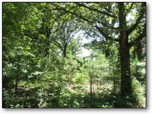 80 Acres In Choctaw County In Frenc : French Camp : Choctaw County : Mississippi