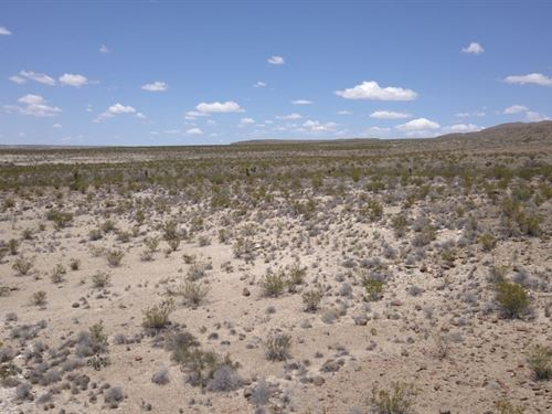 20 In The High Desert : Terlingua : Brewster County : Texas