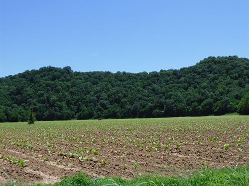 34.16Ac, Barn, Pond, Pasture, Fence : Whitleyville : Jackson County : Tennessee