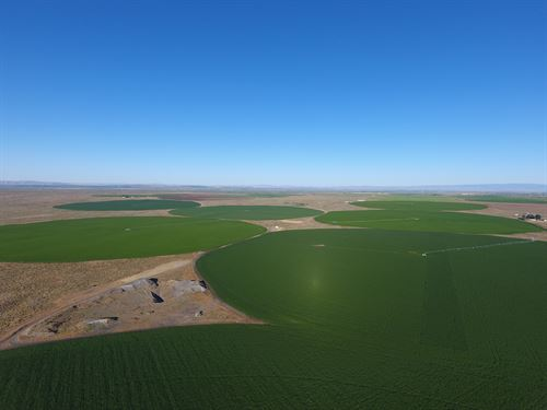 High Yielding Irrigated Farmland : Quincy : Grant County : Washington