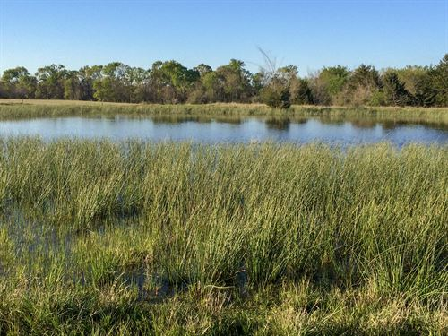Pasture, Heavily Treed W/ Pond : Cumby : Hunt County : Texas