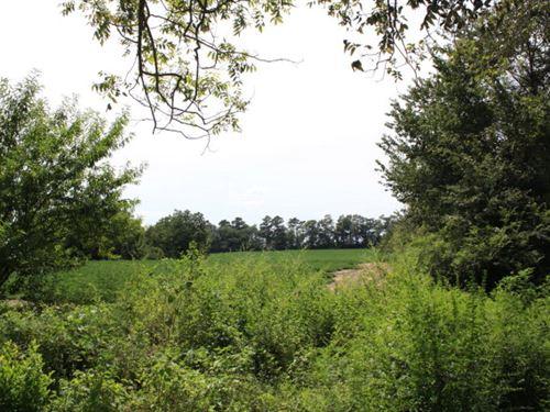 Beautiful Land With Road Frontage : Slocomb : Geneva County : Alabama