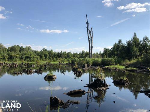Bamberg Goodland Rd Timber/Hunting : Bamberg : South Carolina