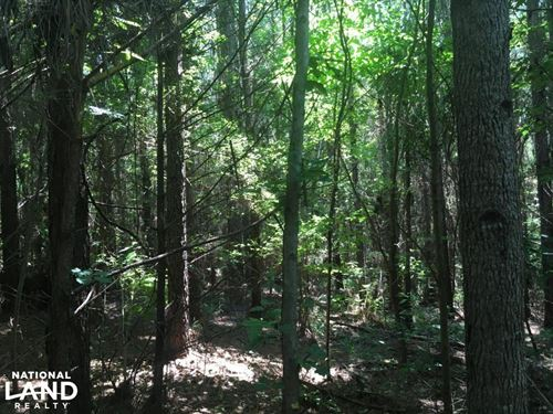 Fortenberry Timberland Property : Meridian : Lauderdale County : Mississippi