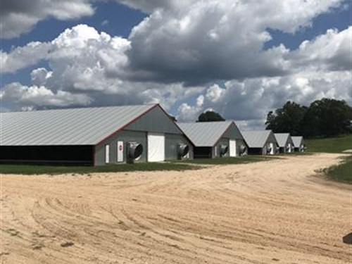 500+/- Ac Poultry Farm : Paulding : Jasper County : Mississippi