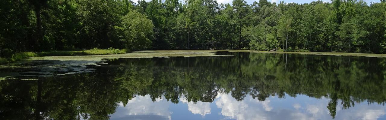 Beautiful Pond 5 Minutes From Macon : Macon : Jones County : Georgia