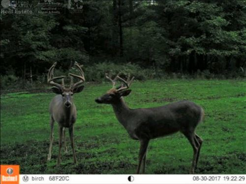 Quality Hunting Parcel : Mosinee : Portage County : Wisconsin